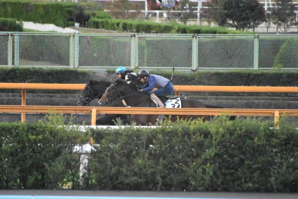 (水)目移りするほど好気配の馬が多数! 連続的中を狙うGメンの阪神JF追い切り診断