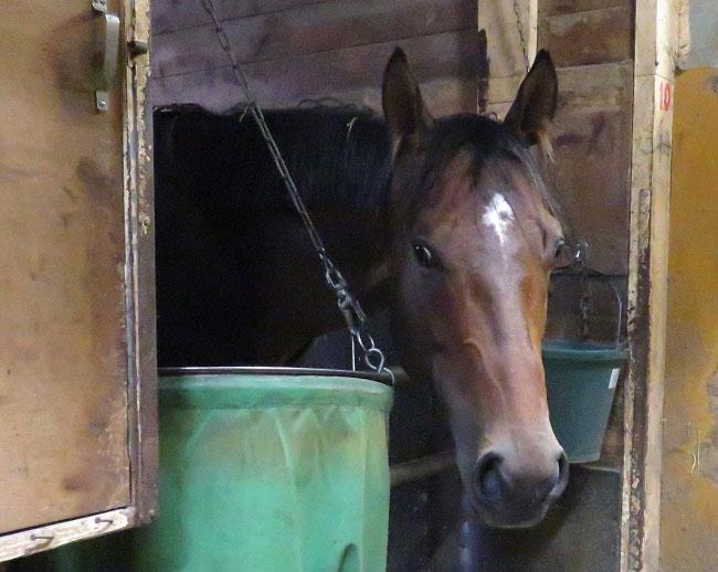 写真で見る!南関東競馬