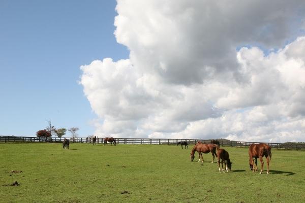 日高の牧場風景