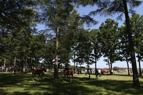 セレクトセール2020まとめ 7月14日当歳馬・2日目上場馬