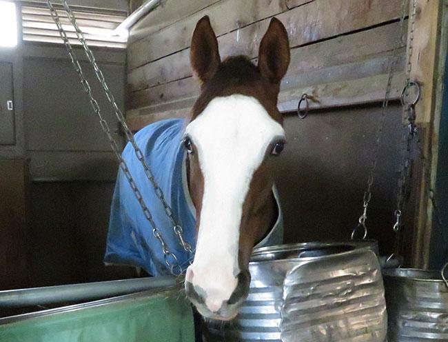 馬ラエティBOX