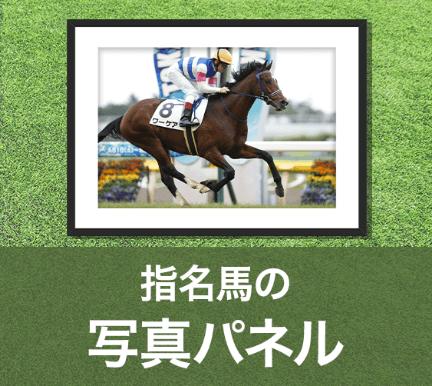 指定馬の写真パネル