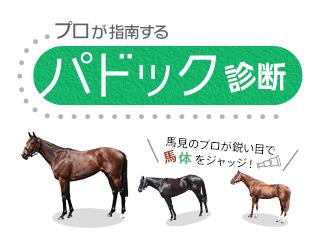 【フェブラリーS】細江純子さんが出走12頭を馬体診断