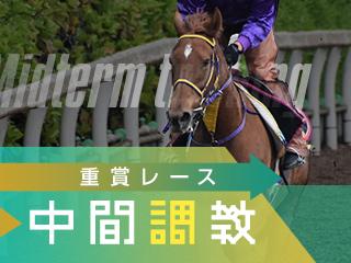 【セントライト記念】その他の馬の調教リポート