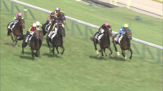 第82回東京優駿 2015年5月31日 東京10R
