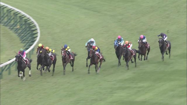 神戸新聞杯 レース映像