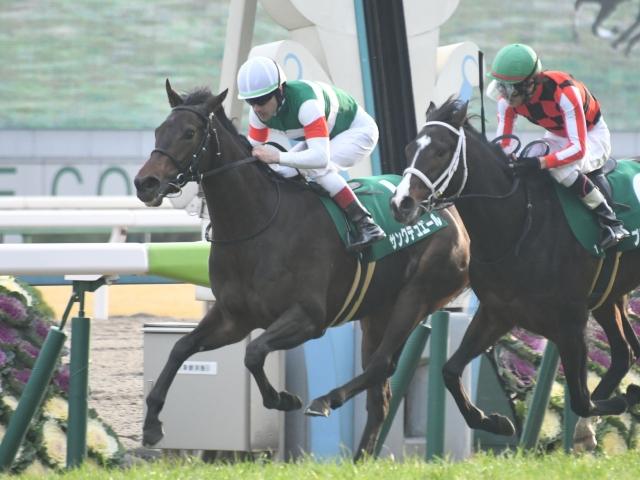 日刊 スポーツ 賞 シンザン 記念
