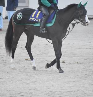経験の浅い2歳馬は<br>最終追い切りのチェックが必須